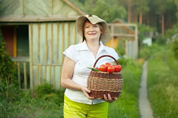 Август – работы в саду и огороде