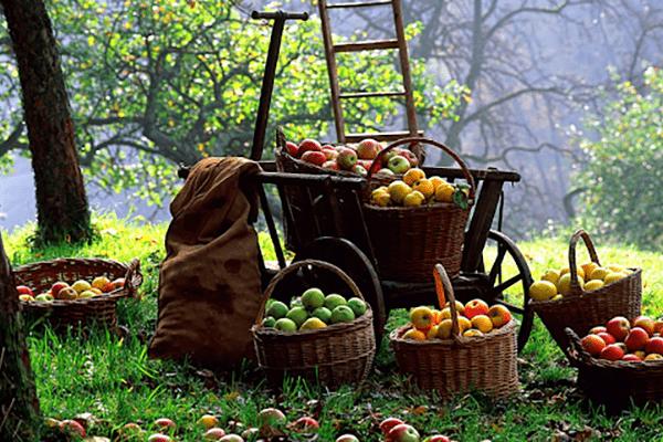 Осенние работы в саду и огороде