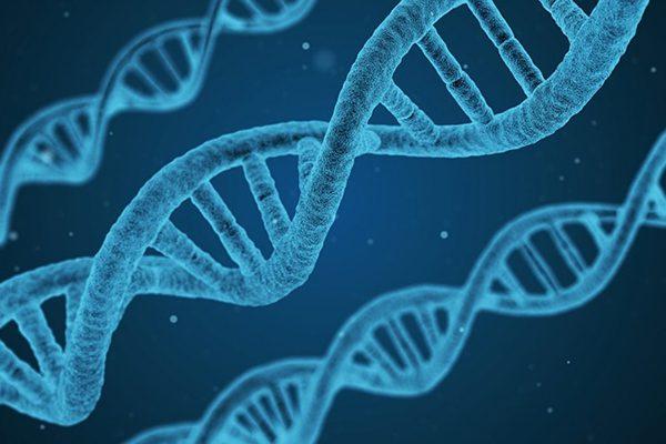 Что значит ДНК
