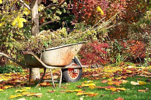 Что сажать осенью?